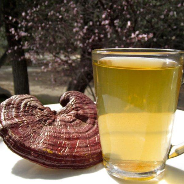 sử dụng trà hòa tan linh chi chăm sóc sức khỏe
