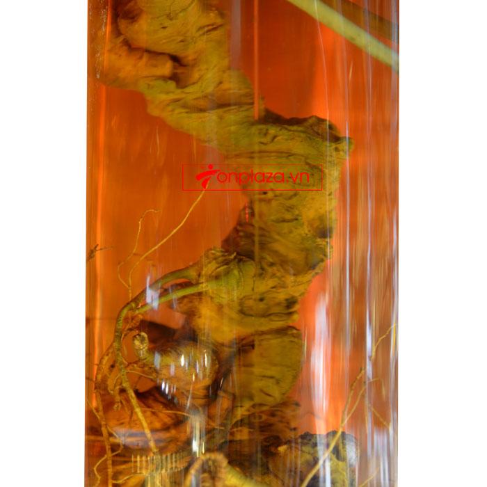 Bình sâm Ngọc Linh hình trụ dài củ to 20L (loại 10 củ/kg) NS327 6