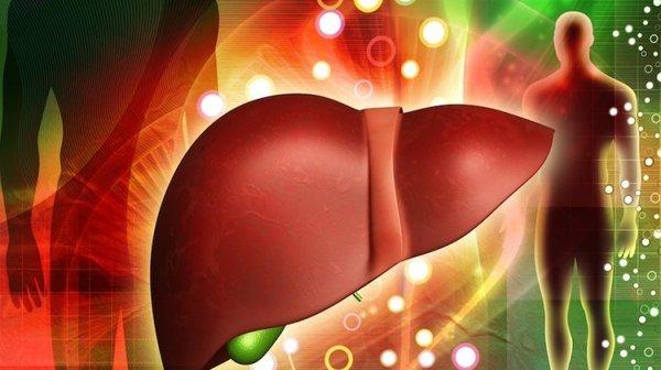 công dụng của nấm linh chi với bệnh gan mãn tính