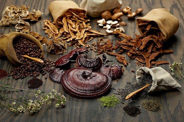 Dùng nấm linh chi để chế biến chăm sóc sức khoẻ