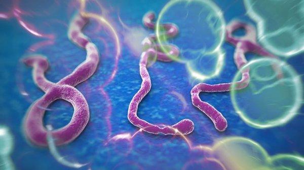 Kháng virus tăng cường miễn dịch cho cơ thểKháng virus tăng cường miễn dịch cho cơ thể