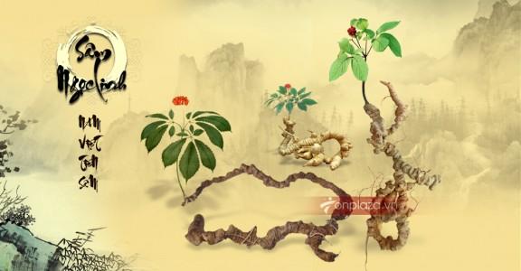 Sâm Ngọc Linh là gì - tại sao gọi là tiên dược quý của Việt Nam
