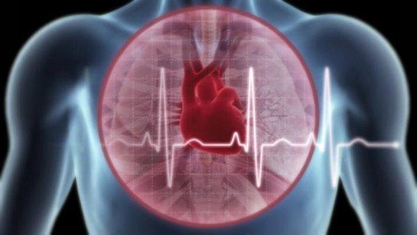 Trái tim khỏe mạnh nhờ nấm linh chi