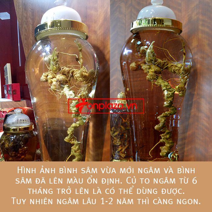 Bình ngâm sâm Ngọc Linh tươi loại 1,9kg/củ 1