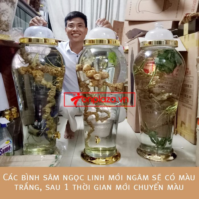 Bình ngâm sâm Ngọc Linh tươi loại 1,9kg/củ 5