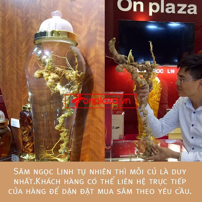 Bình ngâm sâm Ngọc Linh tươi loại 1,9kg/củ 6