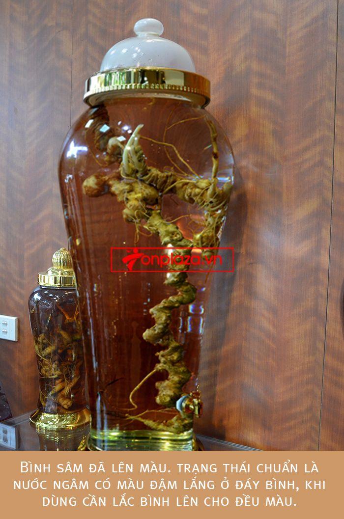Bình ngâm sâm Ngọc Linh tươi loại 1,9kg/củ 7