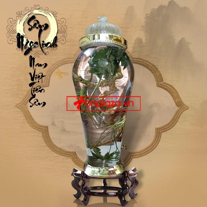 Bình ngâm sâm Ngọc Linh tươi 100 năm tuổi loại 1,5kg/củ 4