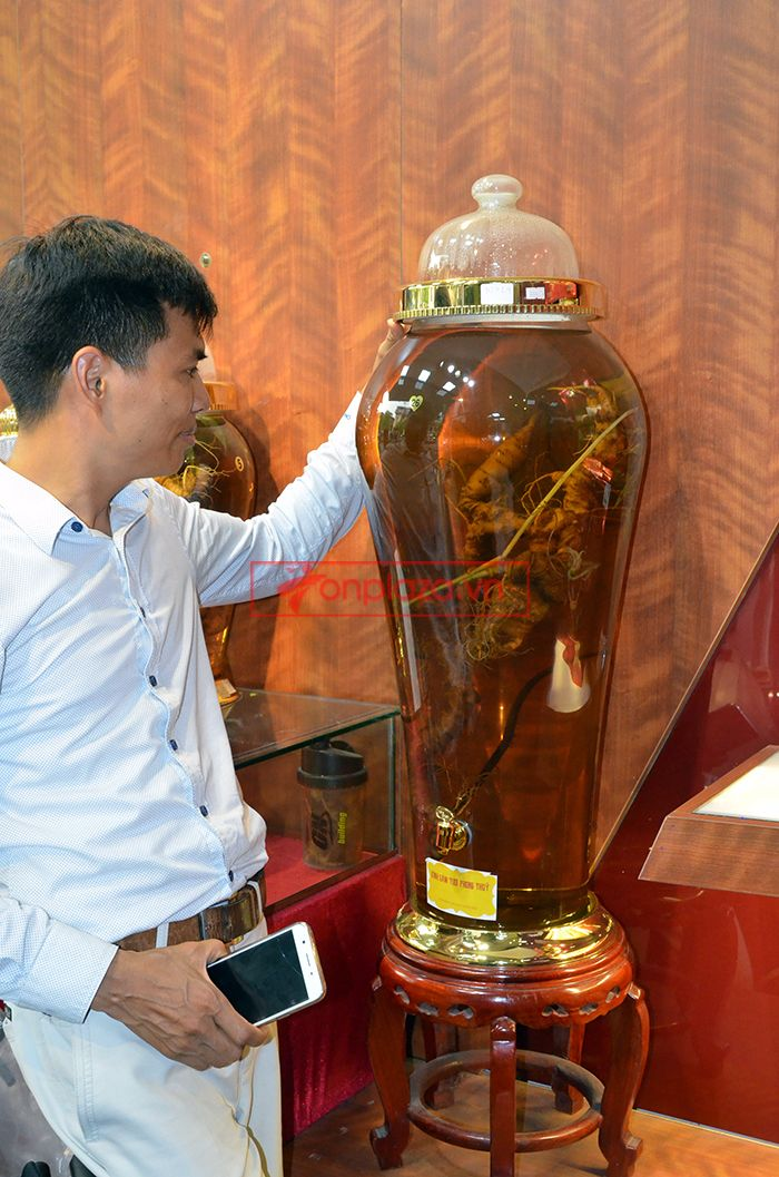 Bình ngâm sâm Ngọc Linh tươi 70 năm tuổi loại 1,65kg/củ 2