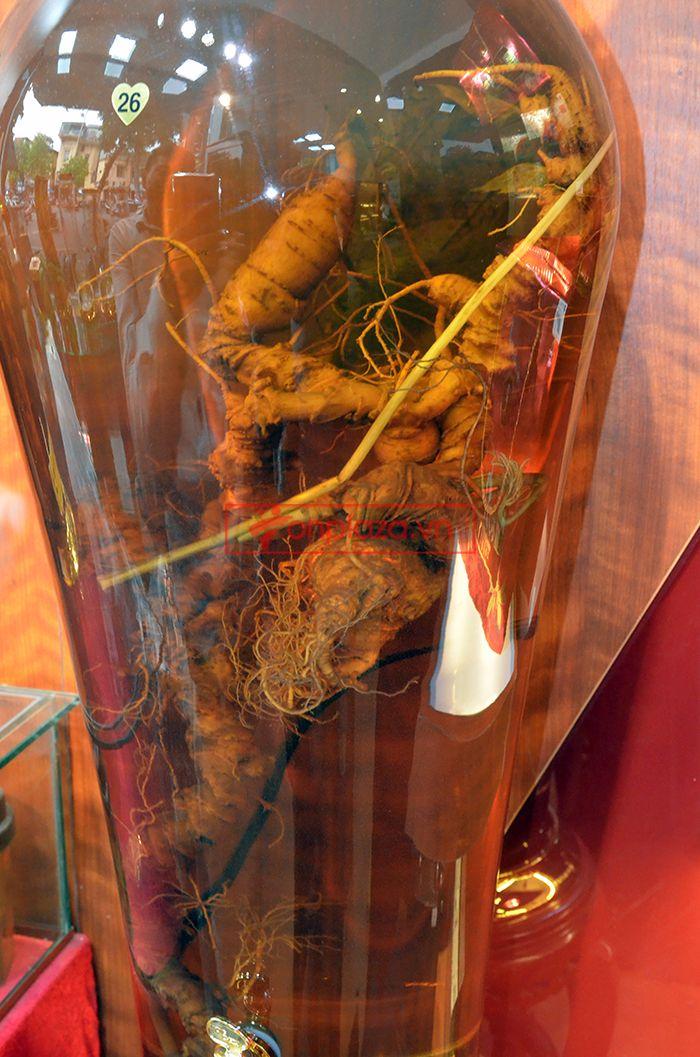 Bình ngâm sâm Ngọc Linh tươi 70 năm tuổi loại 1,65kg/củ 3