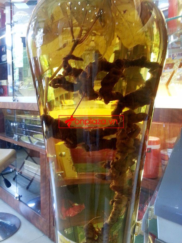 Bình ngâm sâm Ngọc Linh tươi 41 lít loại 2,3kg/củ 1