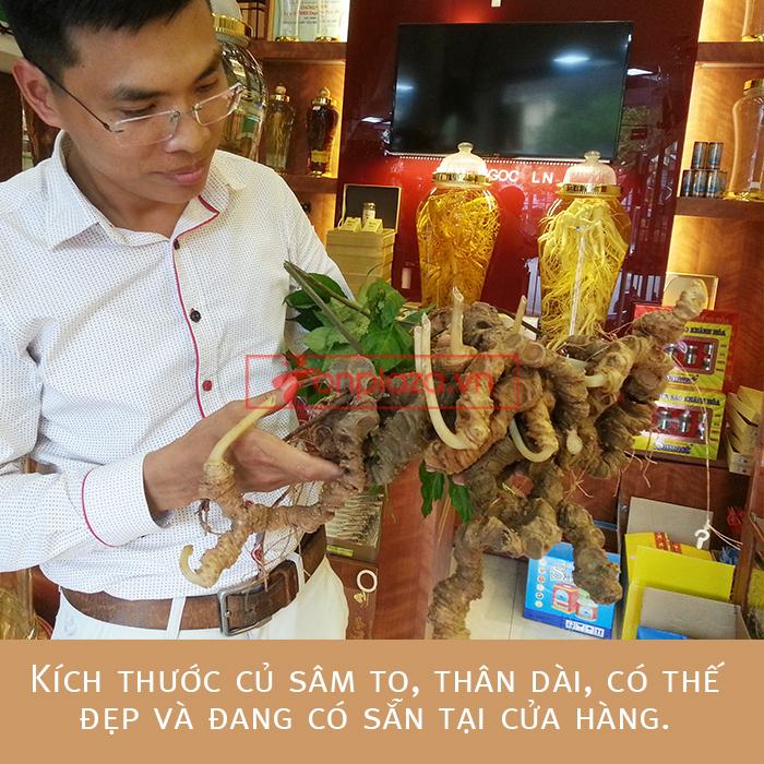 Bình sâm Ngọc Linh tươi 150 năm tuổi loại 2,4kg/củ 1