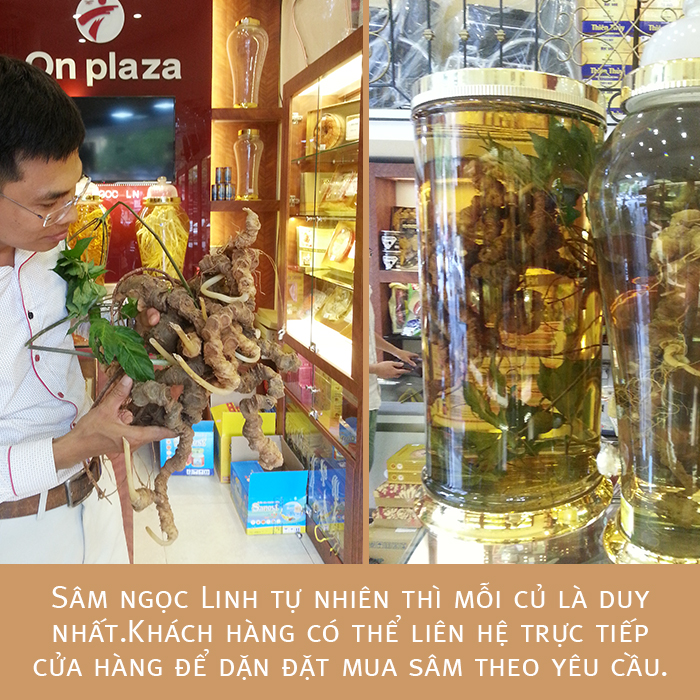 Bình sâm Ngọc Linh tươi 150 năm tuổi loại 2,4kg/củ 2