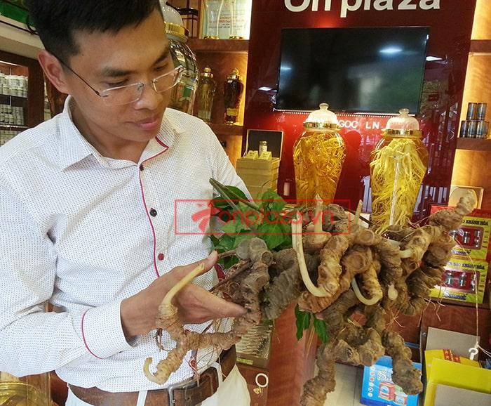 Bình sâm Ngọc Linh tươi 150 năm tuổi loại 2,4kg/củ 7