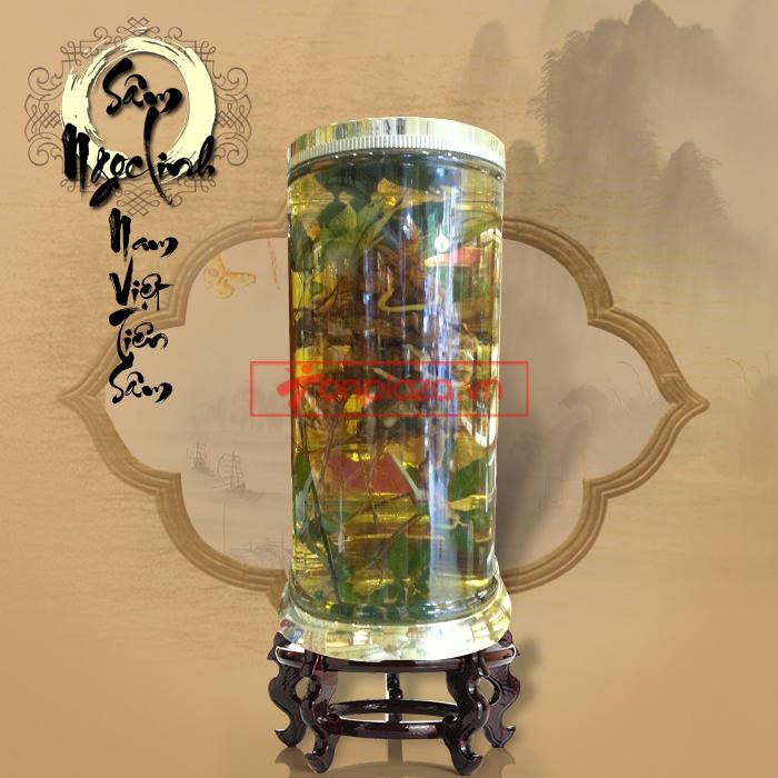 Bình sâm Ngọc Linh tươi 150 năm tuổi loại 2,4kg/củ