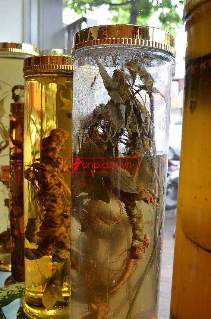 các mẫu bình ngâm sâm ngọc linh khác tại cửa hàng 1
