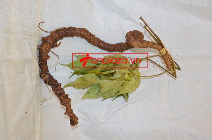 Bình ngâm sâm Ngọc Linh núi tươi loại 1,75 kg/củ 5
