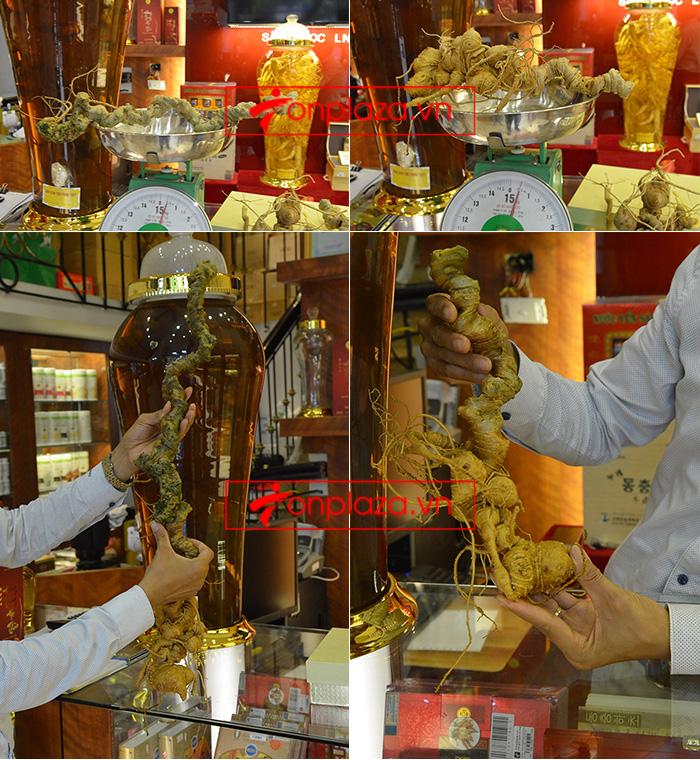 Những mẫu sâm ngọc linh khác hiện đang có tại Onplaza Việt-Pháp 12