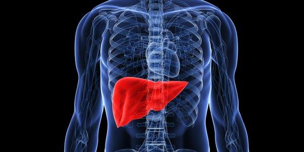 sâm ngọc linh hỗ trợ điều trị gan nhiễm mỡ hiệu quả