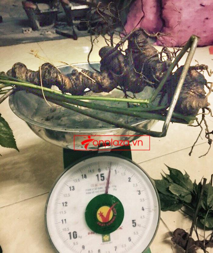 Sâm Ngọc Linh nguyên củ tự nhiên loại 6,2 lạng/củ 1