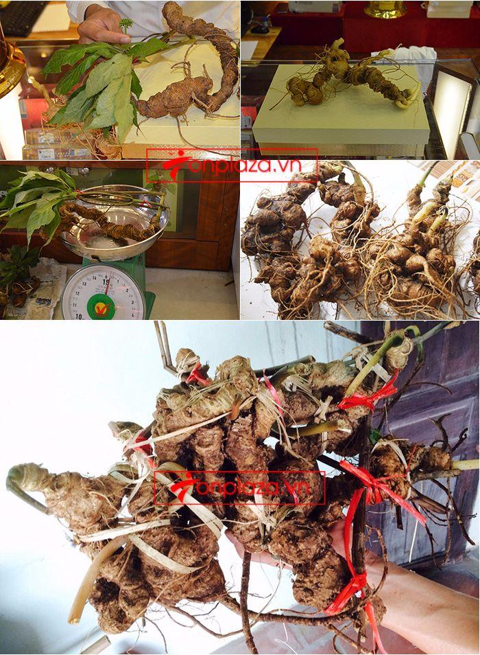 Một số hình ảnh rõ nét về các sản phẩm sâm ngọc linh khác hiện có tại cửa hàng 3
