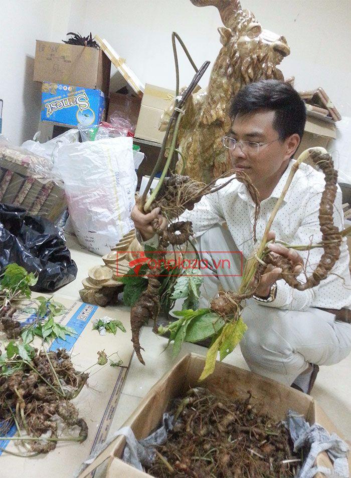 Sâm Ngọc Linh tươi tự nhiên loại 1,5kg/củ 6