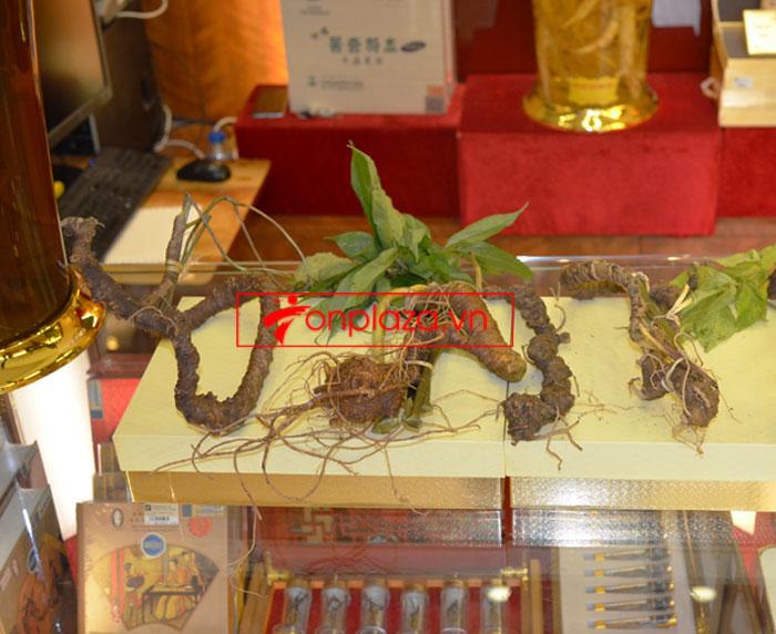 Sâm Ngọc Linh tươi tự nhiên 10 - 20 củ/1kg 11