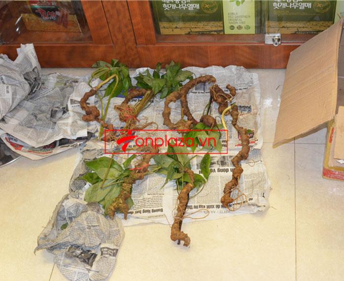 Sâm Ngọc Linh tươi tự nhiên 10 - 20 củ/1kg 4