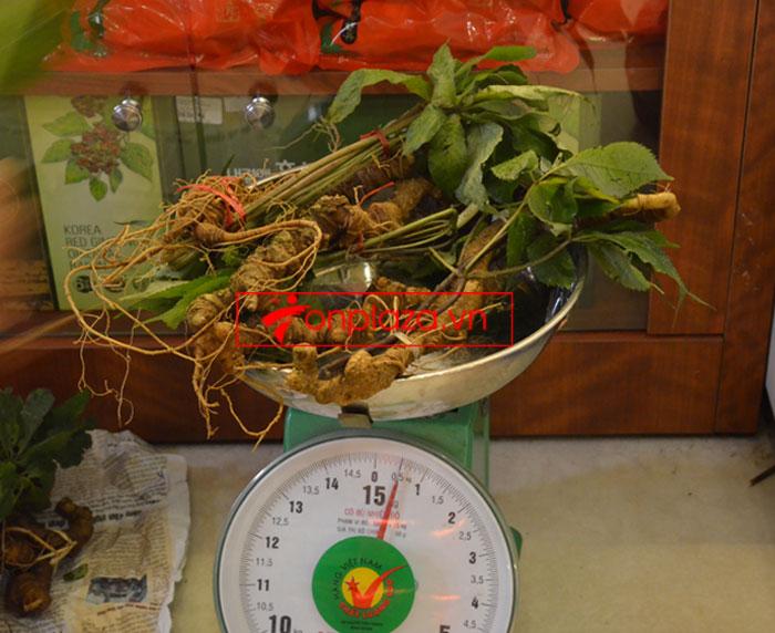 Sâm Ngọc Linh tươi tự nhiên 10 - 20 củ/1kg 6