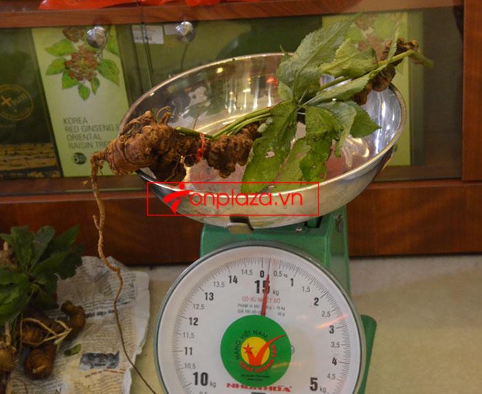 Sâm Ngọc Linh tươi tự nhiên 10 - 20 củ/1kg 7