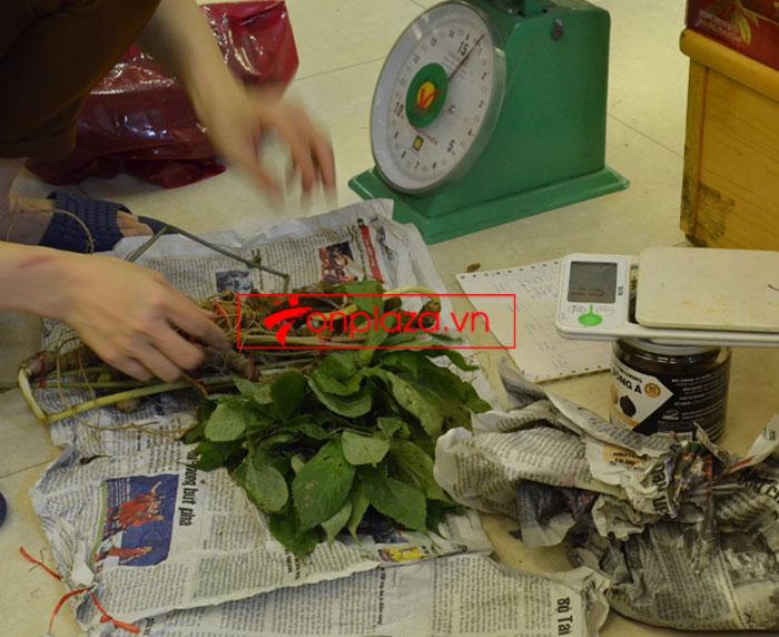 Sâm Ngọc Linh tươi tự nhiên 10 - 20 củ/1kg 8