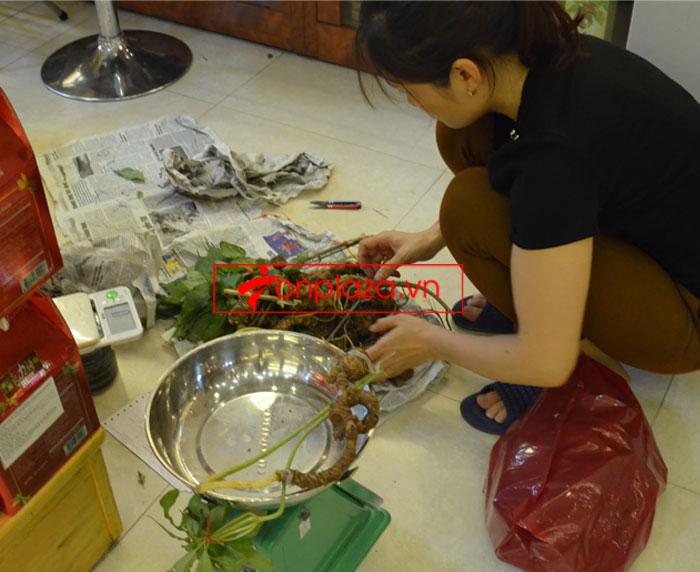 Sâm Ngọc Linh tươi tự nhiên 10 - 20 củ/1kg 9