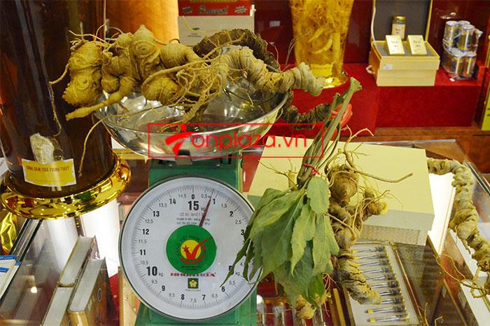 Sâm Ngọc Linh núi tươi loại 6,5 lạng/củ 1