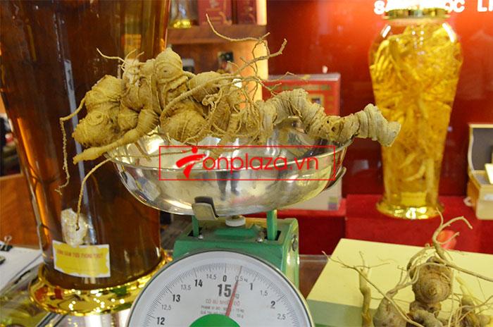Sâm Ngọc Linh núi tươi loại 6,5 lạng/củ 2