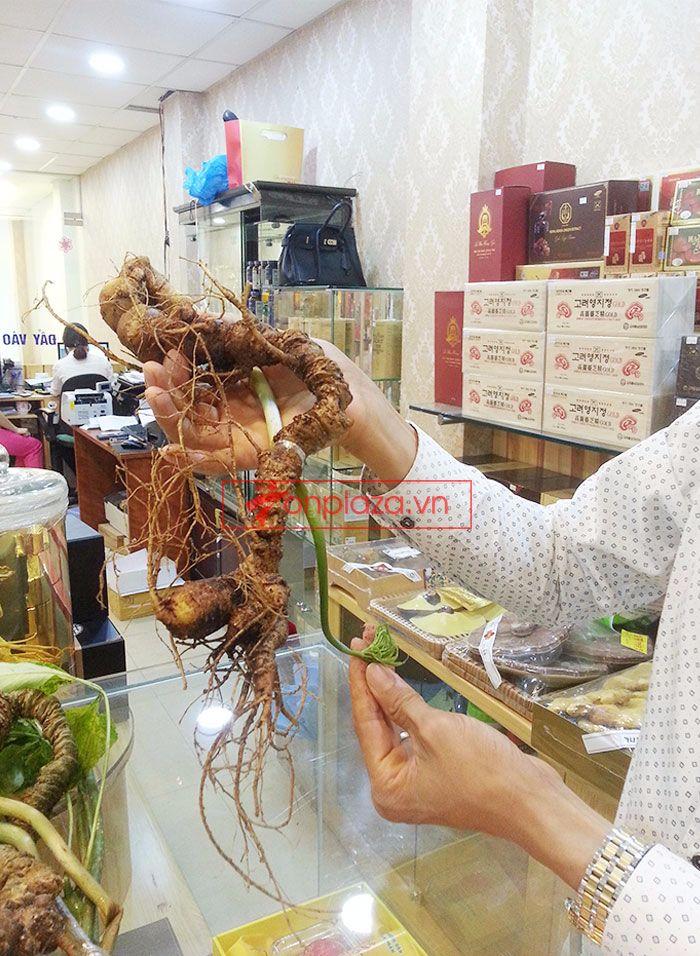 Sâm Ngọc Linh tươi tự nhiên loại 1kg/củ 7