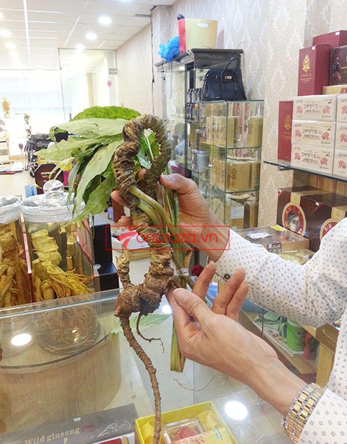 Sâm Ngọc Linh tươi tự nhiên loại 1kg/củ 8