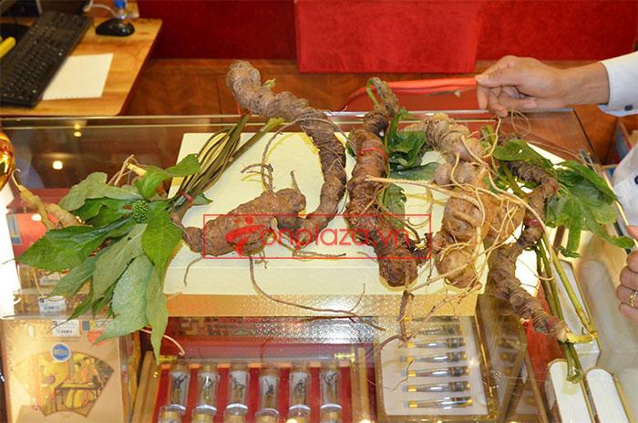 Sâm Ngọc Linh tươi tự nhiên loại 5 củ/1kg 1