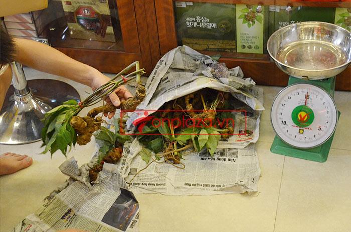Sâm Ngọc Linh tươi tự nhiên loại 5 củ/1kg 10