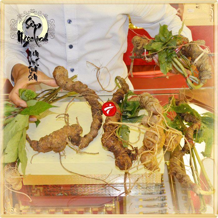 Sâm Ngọc Linh tươi tự nhiên loại 5 củ/1kg 11