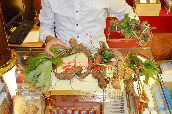 Sâm Ngọc Linh tươi tự nhiên loại 5 củ/1kg 2