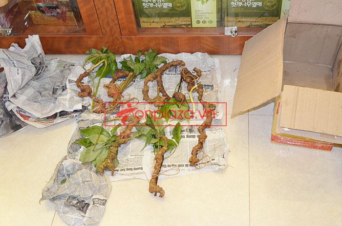 Sâm Ngọc Linh tươi tự nhiên loại 5 củ/1kg 8