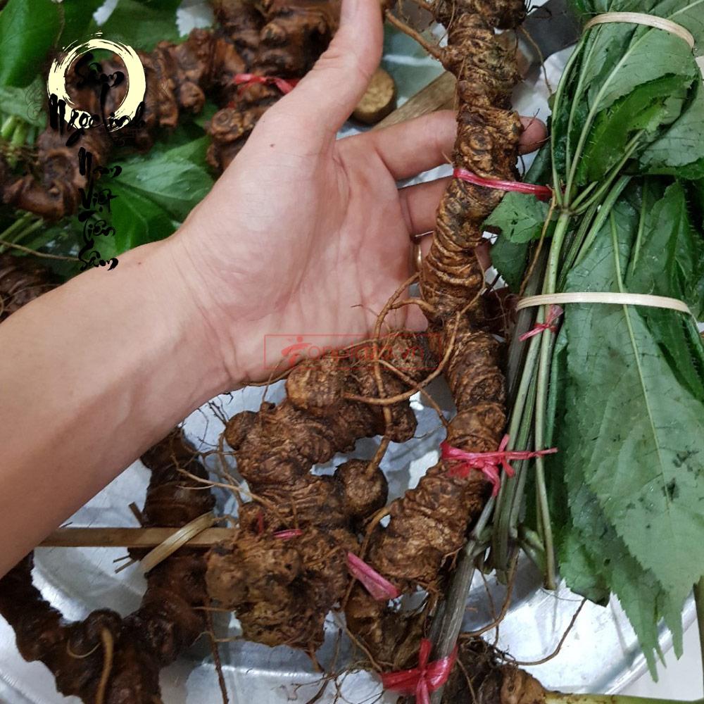 Sâm Ngọc Linh tươi tự nhiên loại 5 củ/1kg