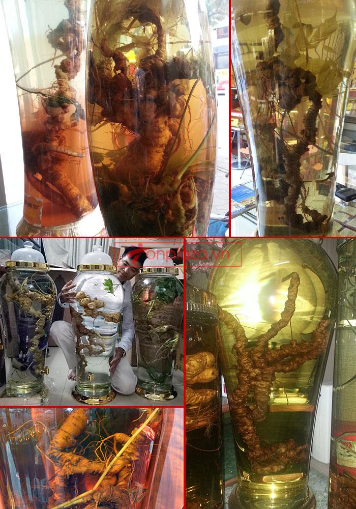Giới thiệu một số mẫu sâm ngọc linh khác hiện có tại Onplaza Việt-Pháp 3