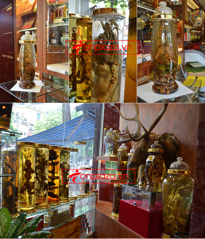 Giới thiệu một số mẫu sâm ngọc linh khác hiện có tại Onplaza Việt-Pháp 4