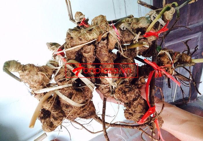 Bình ngâm sâm Ngọc Linh tươi 41 lít loại 2,3kg/củ 8