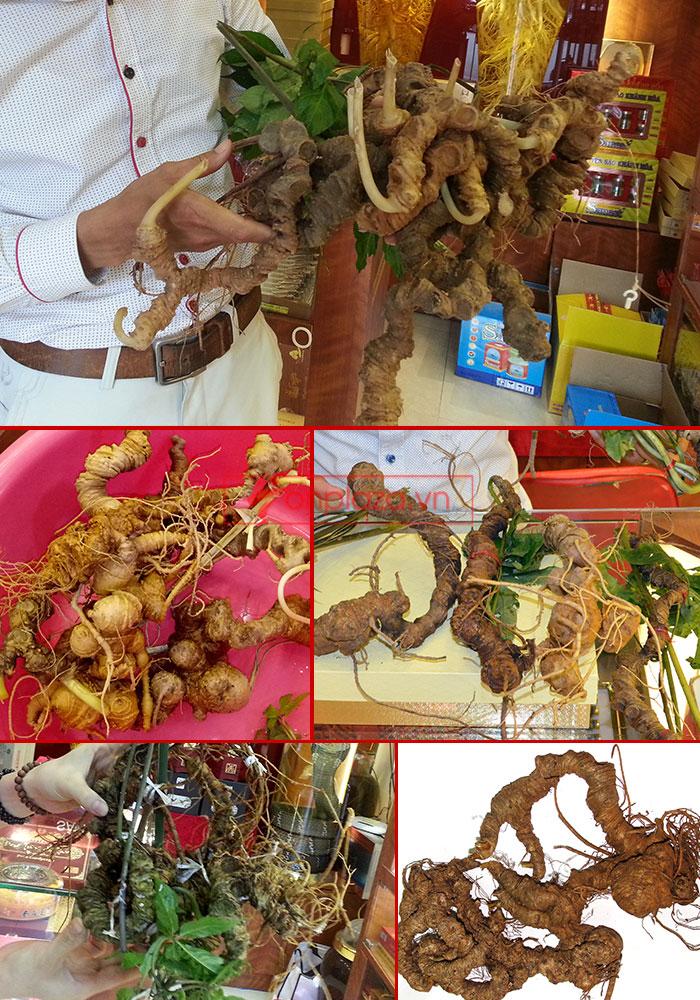 hình ảnh trưng bày các sản phẩm sâm ngọc linh khác tại cửa hàng 5