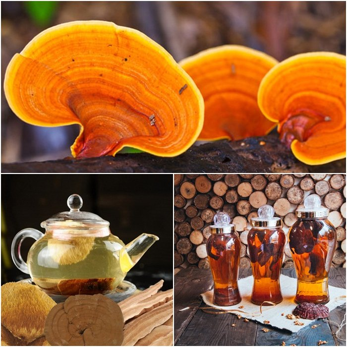 Linh chi vàng có thể hãm trà, ngâm rượu hoặc nấu soup