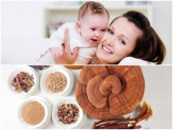 Nấm linh chi được các bà mẹ bỉm sữa dùng để lấy lại vóc dáng
