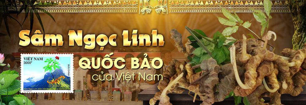 """Sâm ngọc linh """"Quốc Bảo"""" của Việt Nam"""