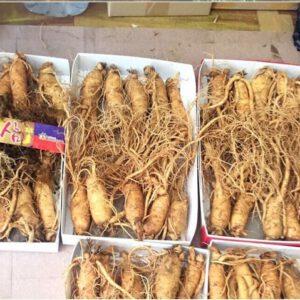Nhân sâm Hàn Quốc loại 10 củ/kg NS007 4